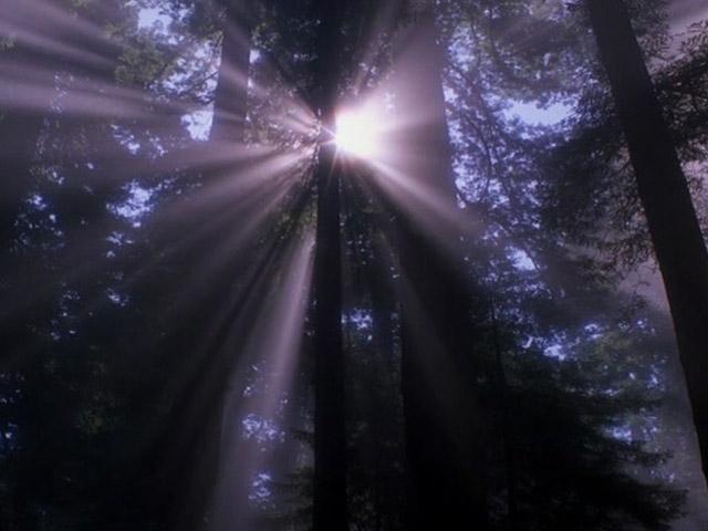 Dangaus šešėlis II dalis